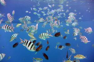 魚はいっぱい